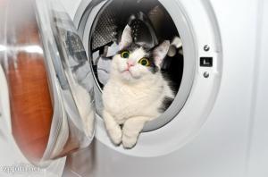 как выбрать качественную стиральную машину автомат