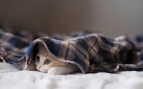 норма температуры в квартире